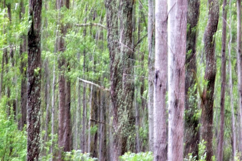 Rainy trees.jpg