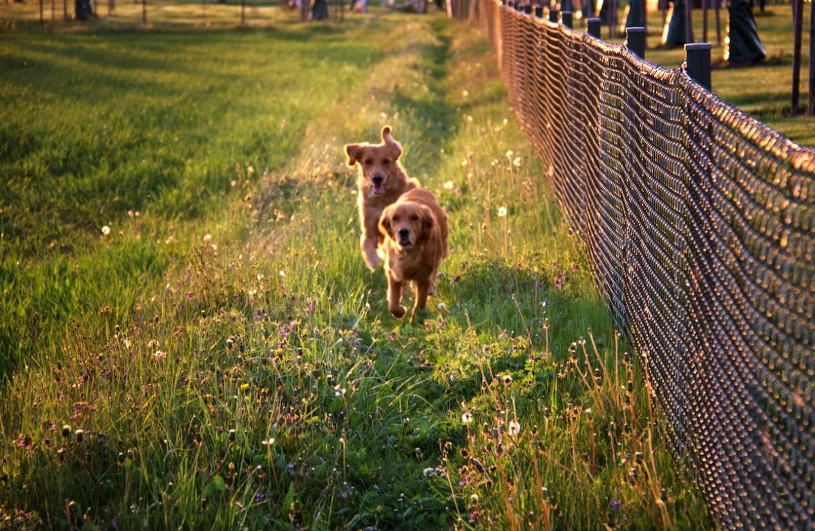 Dogs running.jpg