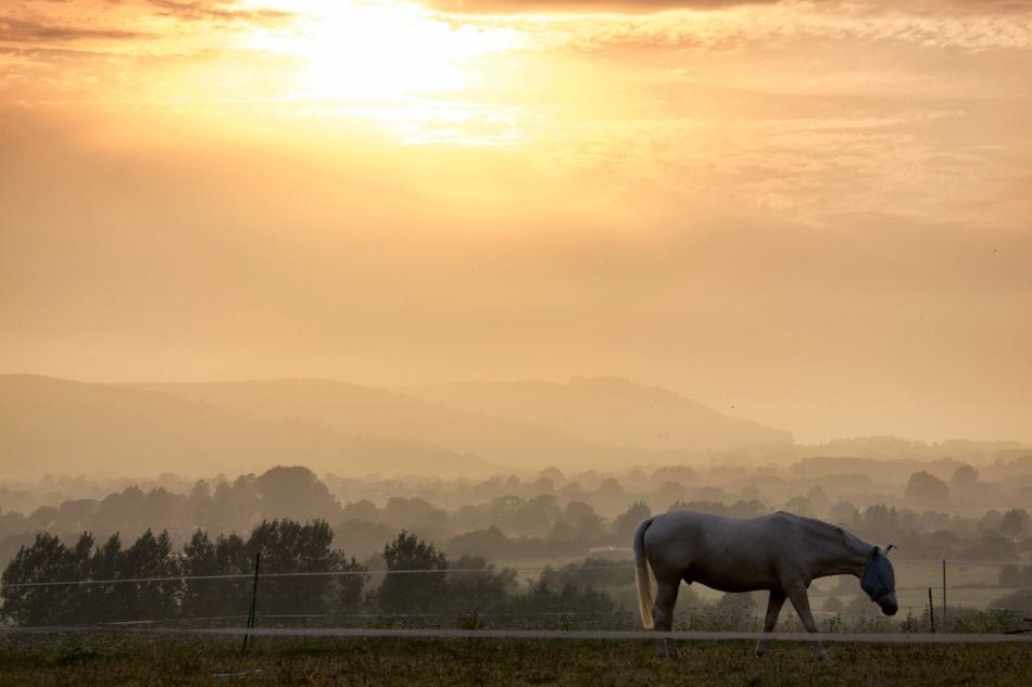 Horseglow.jpg