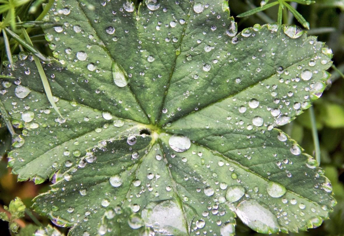Raindrops 1.jpg