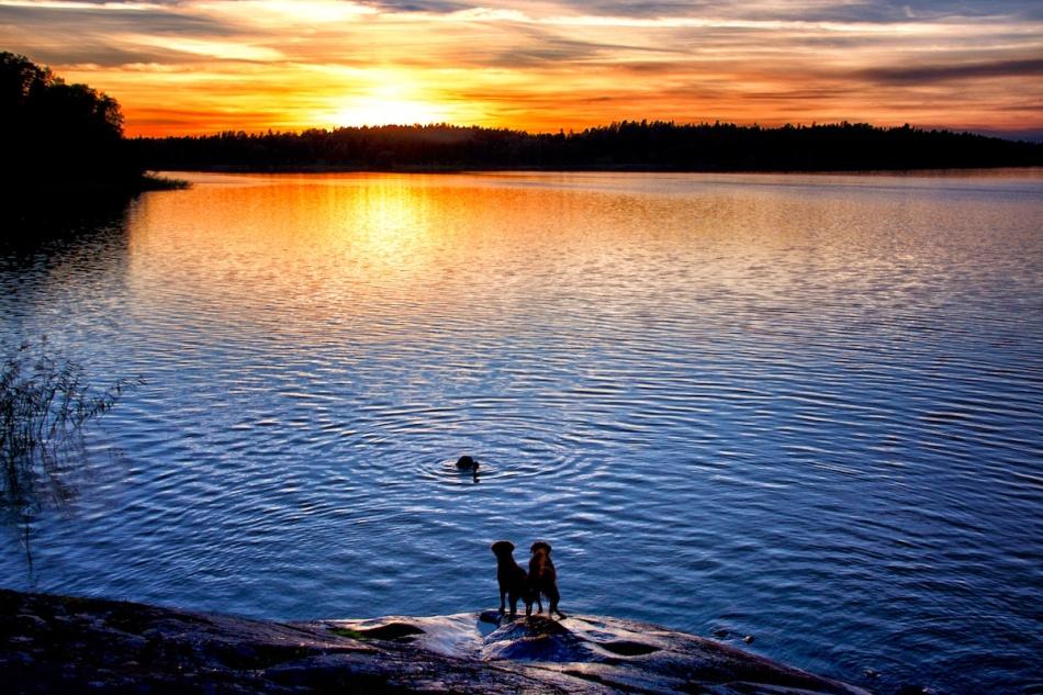 sunsetswim
