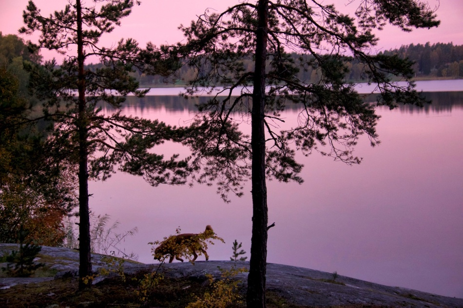 View with dog.jpg