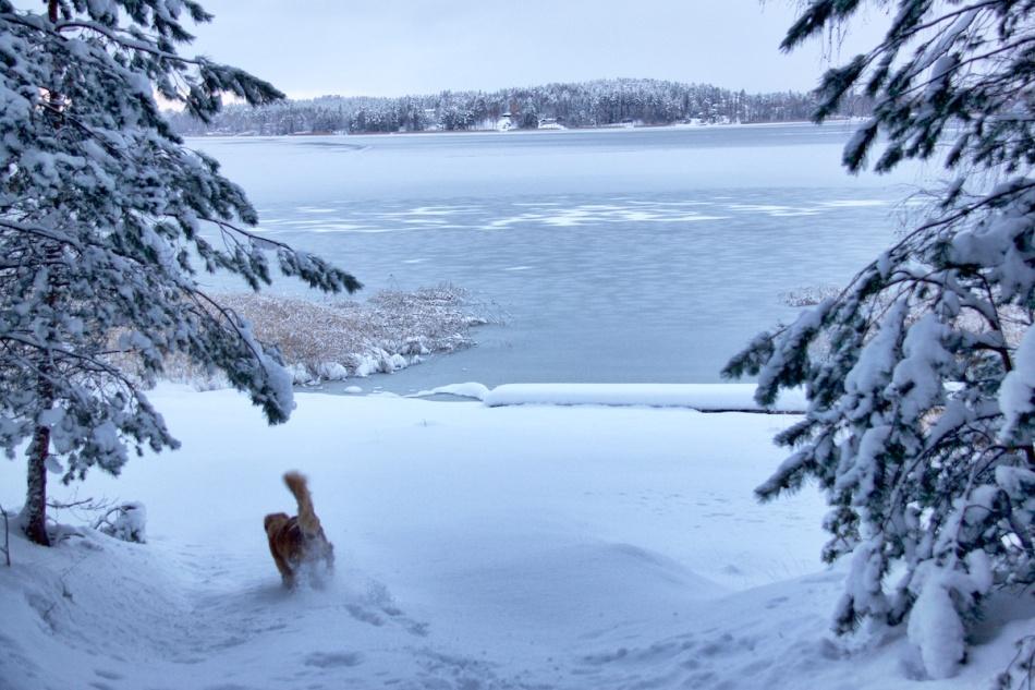 Snowybeach.jpg