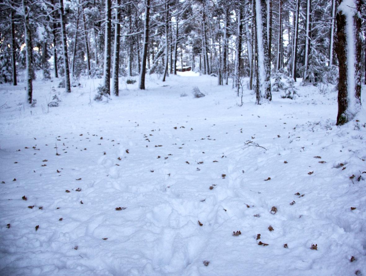 Snowyleaves.jpg
