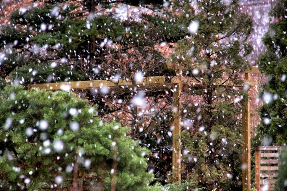 Snowygarden.jpg