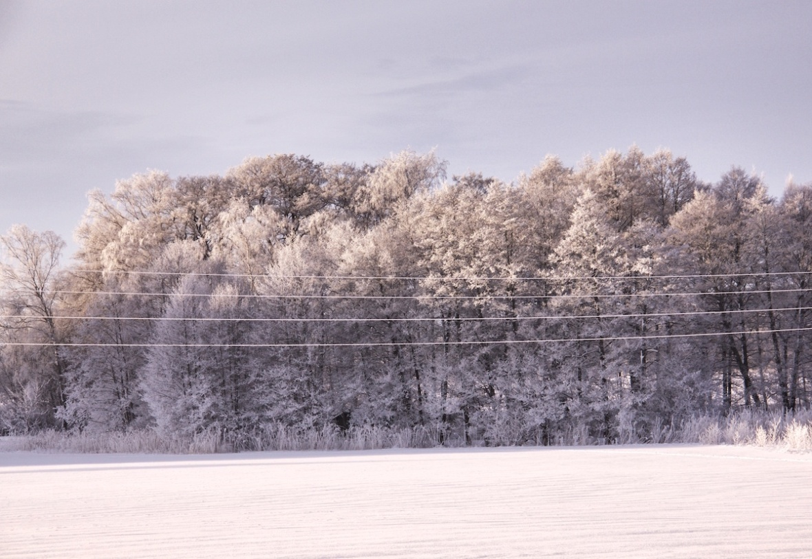 Hoarfrosted trees.jpg