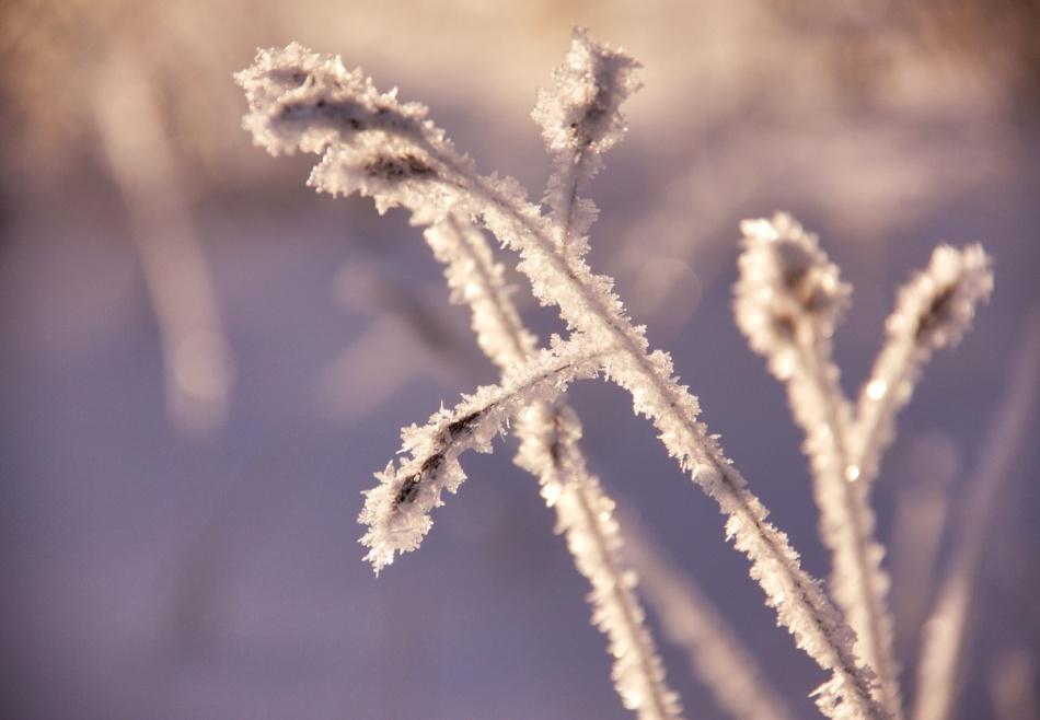Icecrystals.jpg