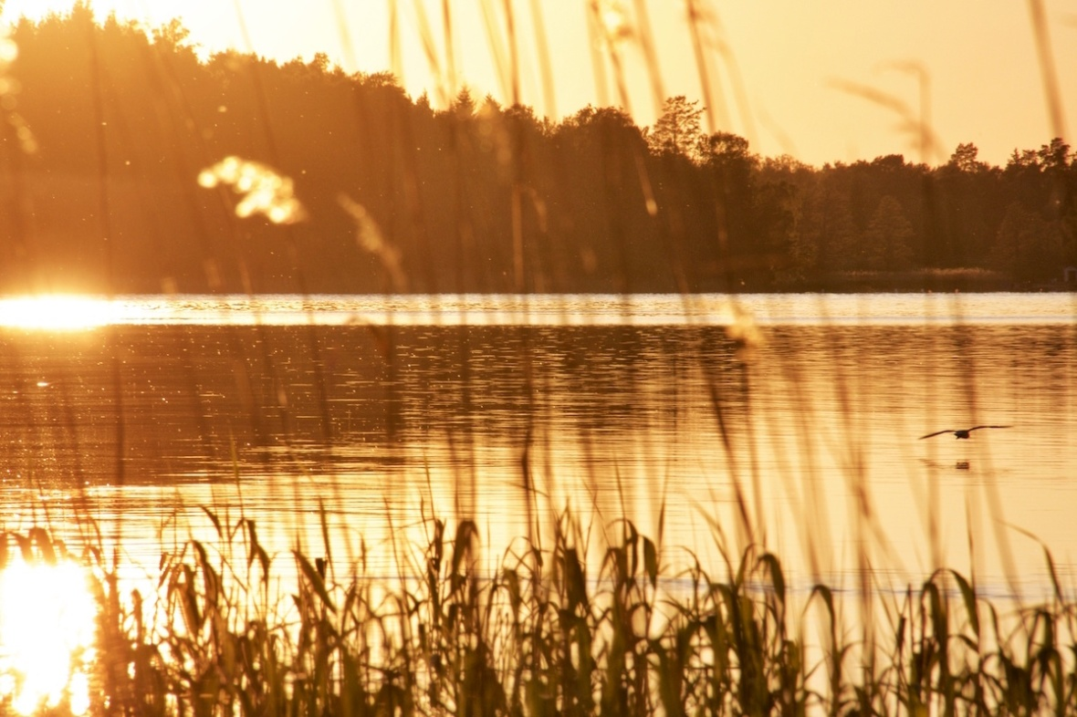 Goldenwithbird.jpg