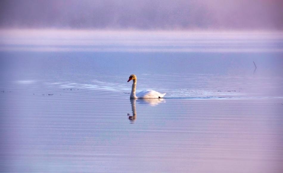 Swan stripes.jpg