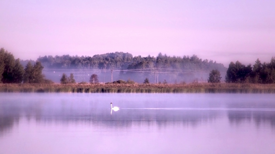 Swanlake.jpg