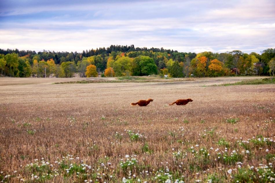 Autumndogs.jpg