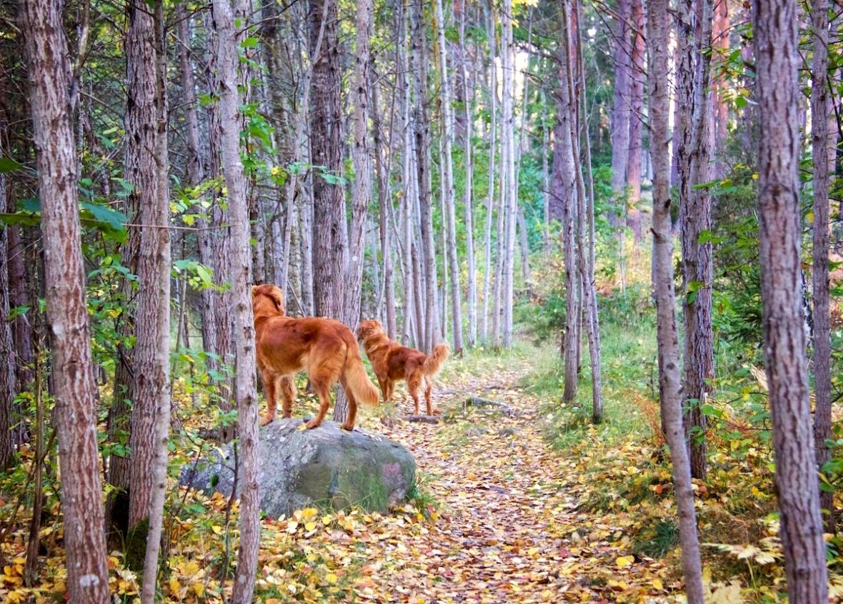 Dogs_leaves.jpg