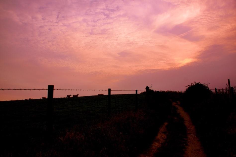 Sheepsilhouettes.jpg