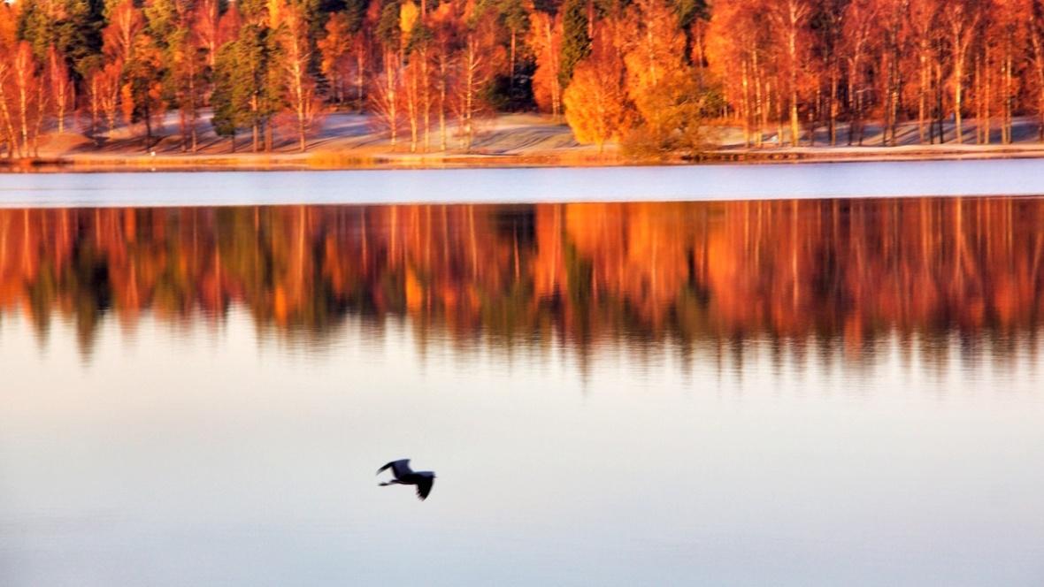 Heron1.jpg