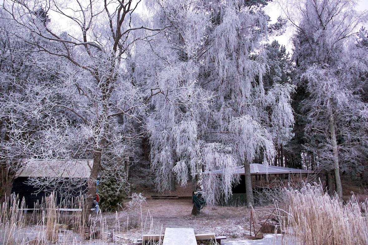 Icytrees.jpg