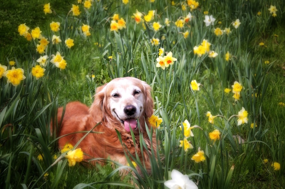 laughing-in-daffs copy.jpg