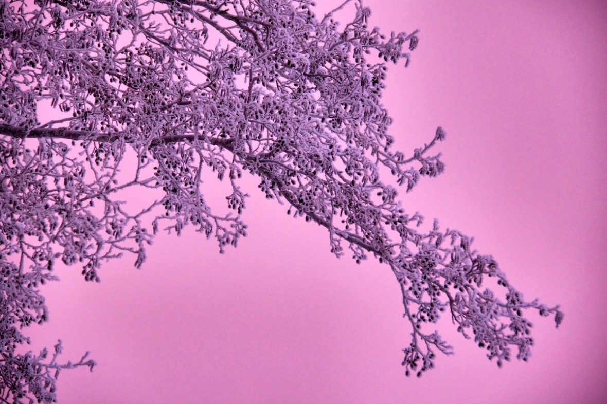 Pink_sky.jpg