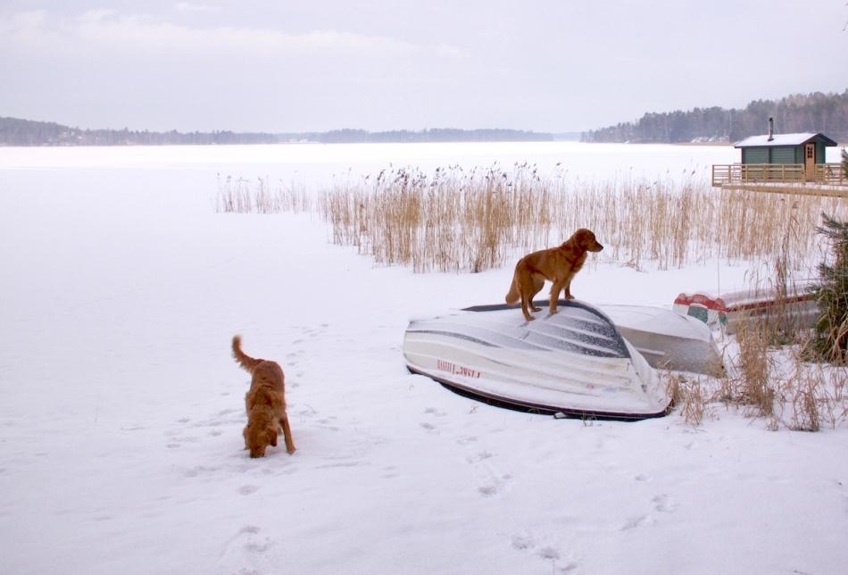 Dogsonboat.jpg