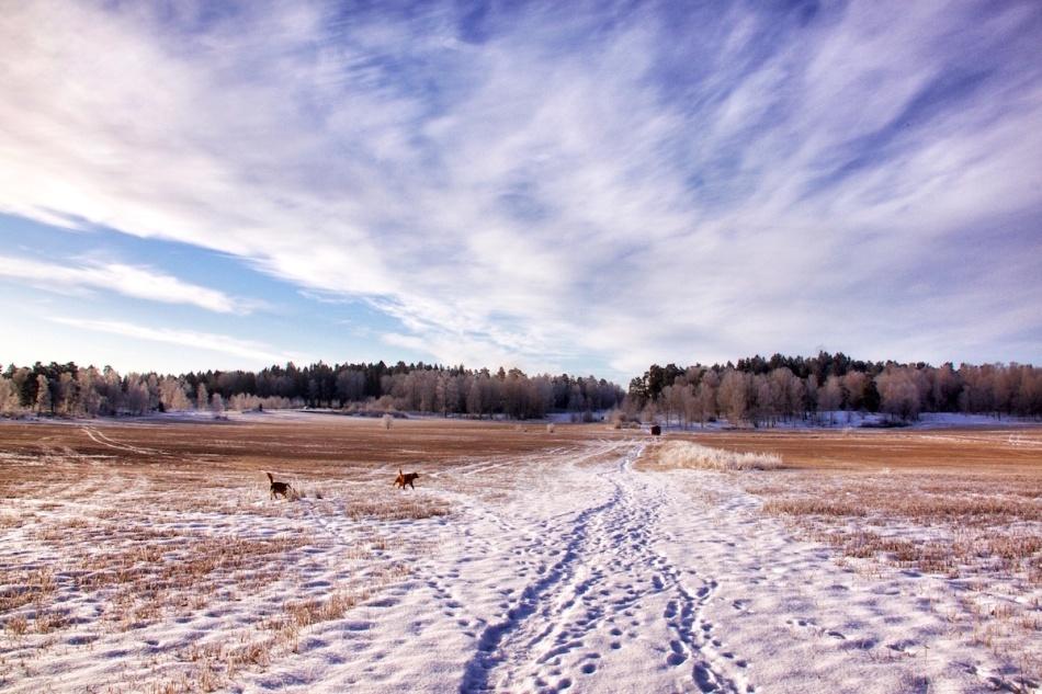 Snowysky.jpg