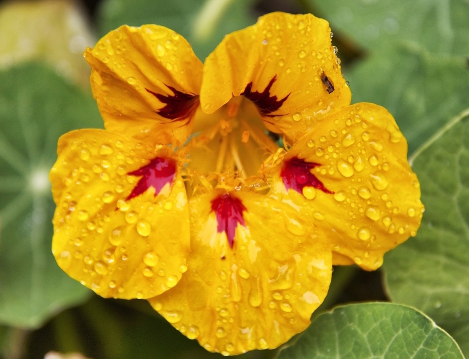Rainyflower.jpg