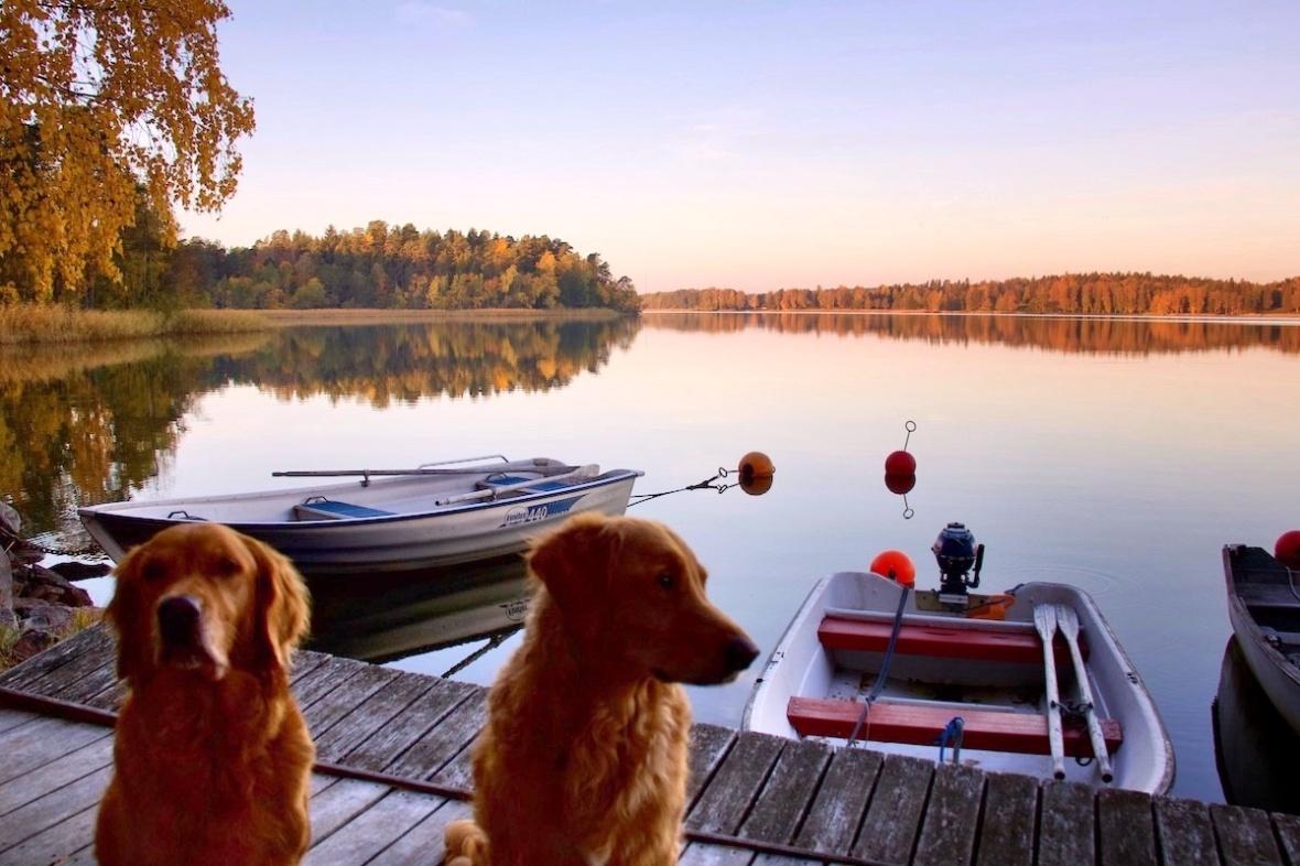 Autumn_dogs.jpg