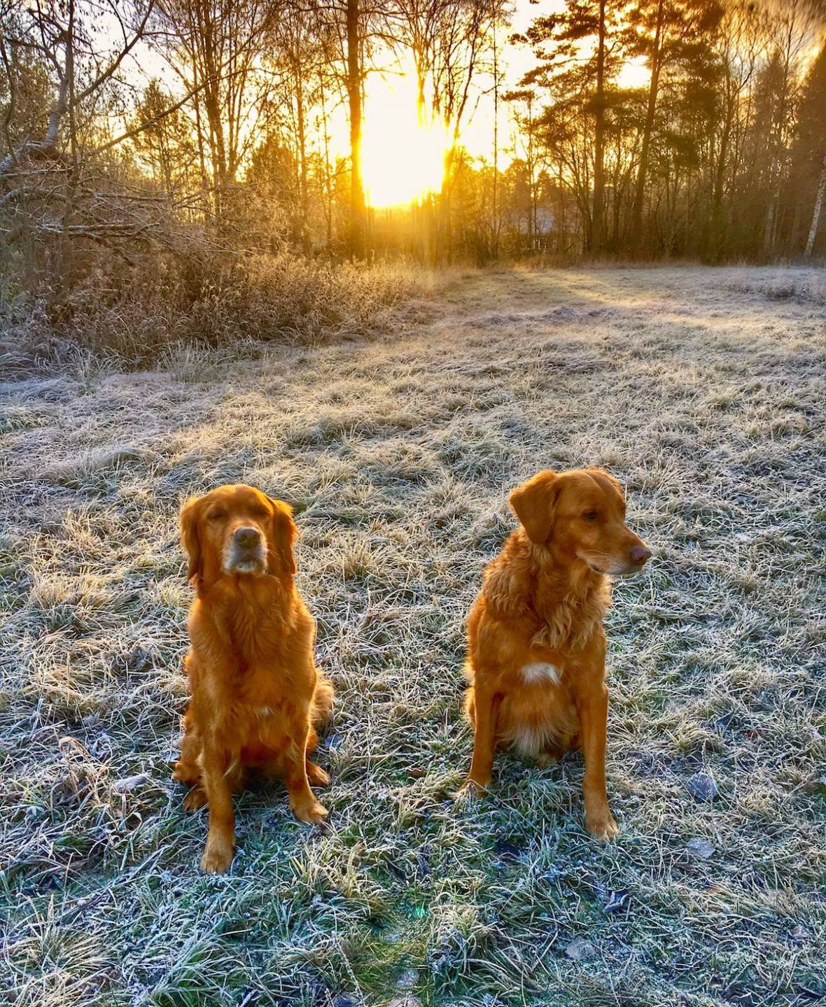 Frosted dogs.jpg