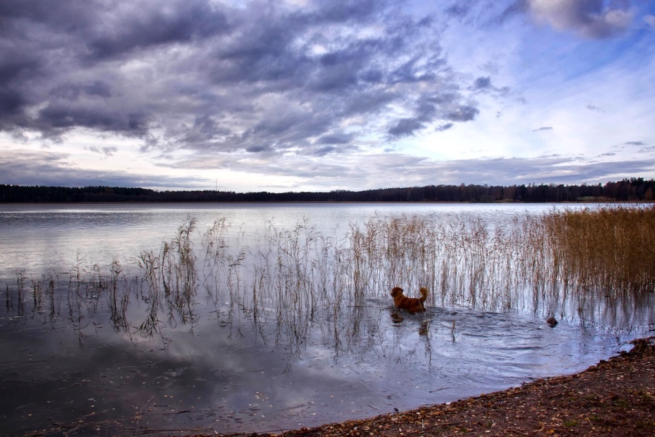 Simmie_lake.jpg